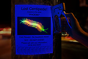 Lost Centipede flyer posted on a telephone pole on a city street at night. Black light photography.