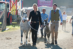 © Licensed to London News Pictures. 19/07/2016. Llanelwedd, Powys, Wales, UK. Horses are led from the stables to the main ring for judging at the beginning of the second day of the Royal Welsh show, with forecasts of temperatures rising to the high twenty degrees centigrade. The Royal Welsh Show management has a Hot Weather contingency plan for the week. A 40 feet articulated truck delivered a full load of mineral water yesterday & another is expected today. The showground has a medical centre compared to a small cottage hospital with doctors, paramedics, nurses on call 24/7.  The Royal Welsh Agricultural Show is hailed as the largest & most prestigious event of its kind in Europe. In excess of 240,000 visitors are expected this week over the four day show period. Photo credit: Graham M. Lawrence/LNP