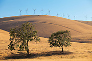 Altamont Pass Wind Farm in Central California