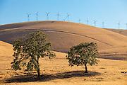 Altamont Pass Wind Farm in Central California