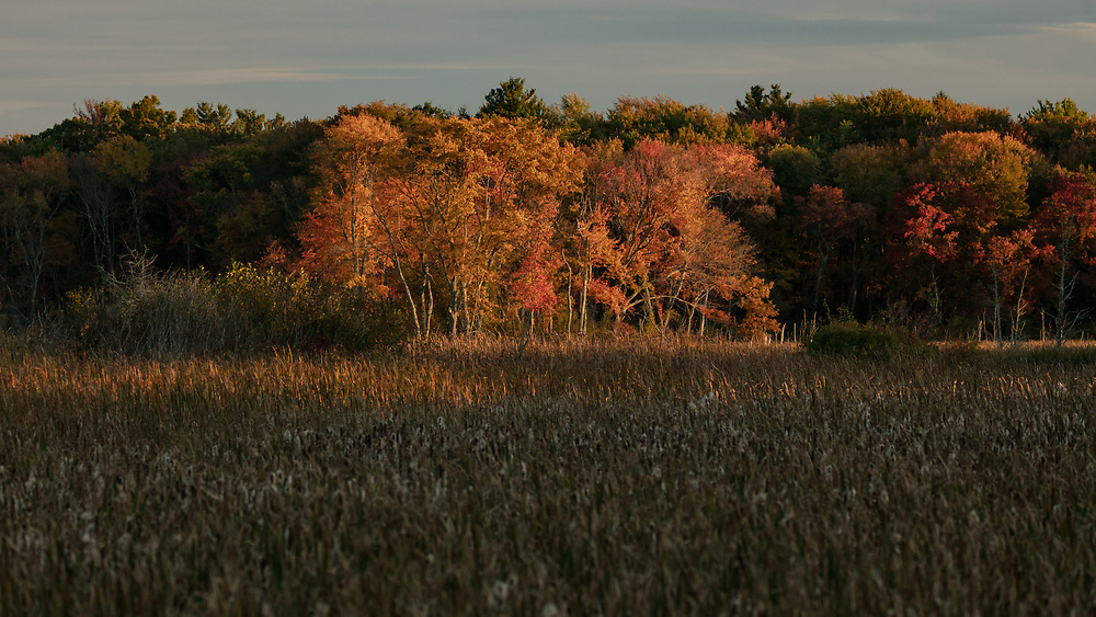 A steak of late afternoon sunlight illuminating the outskirts of a meadow within Minuteman National Park.