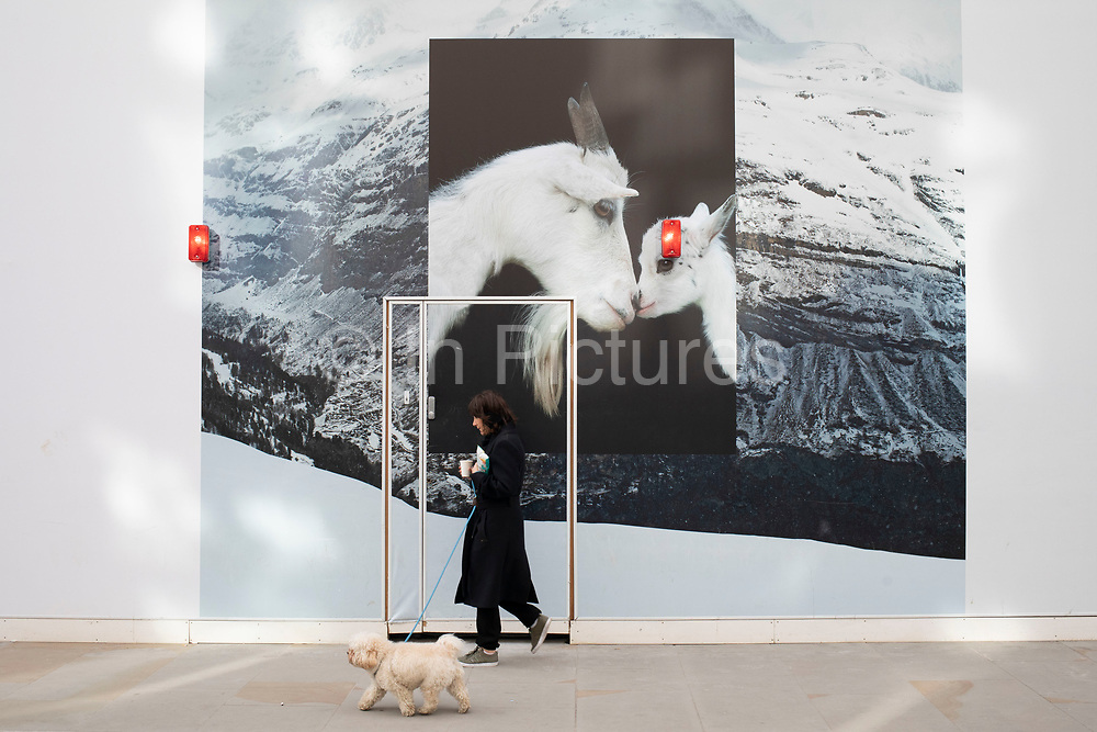 Person walking their dog past a hoarding on a high end fashion shop under refurbishment on Bond Street showing a mother goat and her kid in this most exclusive of shopping streets on 25th February 2020 in London, United Kingdom. Bond Street is one of the principal streets in the West End shopping district and is very upmarket. It has been a fashionable shopping street since the 18th century. The rich and wealthy shop here mostly for high end fashion and jewellery.