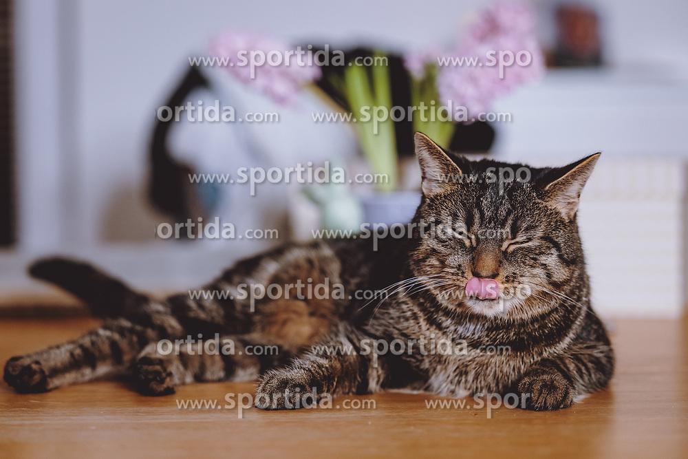 THEMENBILD - eine Tigerkatze, aufgenommen am 20. März 2021, Kaprun, Österreich // a tiger cat, Kaprun, Austria on 2021/03/20. EXPA Pictures © 2021, PhotoCredit: EXPA/ JFK