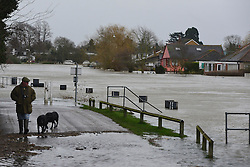 © Licensed to London News Pictures. 11/02/2014. Laleham, UK. A man walks his dogs on a  raised part of the towpath. Flooding in LALEHAM in Surrey today 11th February 2014 after the River Thames burst its banks. The Environment Agency has issued 14 Severe Flood Warnings alone the Thames. Photo credit : Stephen Simpson/LNP