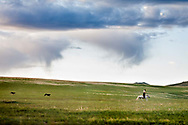 A herdsman stands in his stirrups in Övörkhangai Province, Mongolia.
