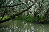 Mystic athmosphere of Tisza lake, Hortobagy National Park, Hungary