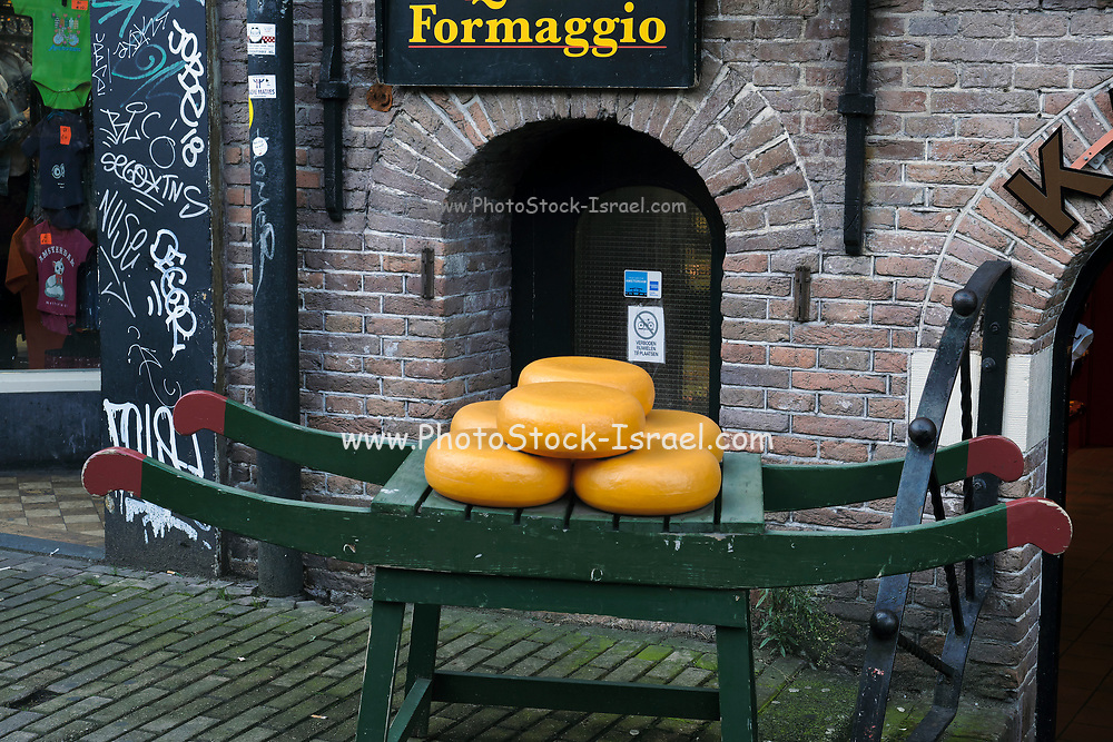 Dutch Cheese on a cheese sled Photographed in Amsterdam, Holland