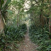 Trail to Reef Bay Great House, St. John, USVI