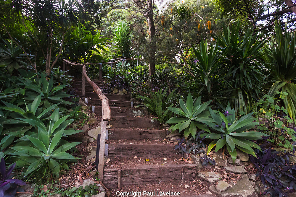Wendy Whiteley's Secret Garden on the lower north shore of Sydney Harbour. It is open to the public for walks, picnics and general harbour views. Wendy and her famous artist husband the late Brett Whiteley set up their family home hear in 1970. After the passing of Brett, Wendy decided to clean up this unused railway land below her house and after much work created the Secret Garden.