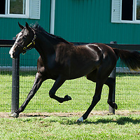 Angelonia - filly - Archangel - Fabulous Tag