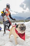 The annual Sun Dog's K-9 Uphill on Buttermilk in Aspen, Colorado.