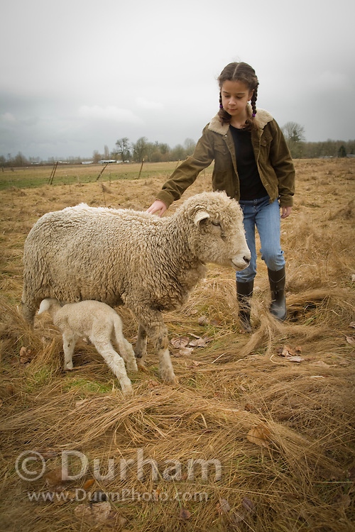 10 year old Isabel inspects a newborn lamb and mother ewe on a small family farm, Oregon. Model and Property released.