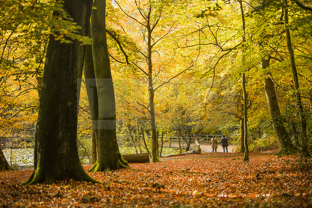 © Licensed to London News Pictures. 22/10/2020. Burnham, UK. Members of the public walk through autumnal colours at Burnham Beeches national park and National Nature Reserve in Buckinghamshire, south East England. Photo credit: Ben Cawthra/LNP