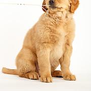 oakley pup