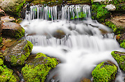 Fern Spring, Yosemite National Park, California USA