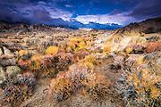 Sagebrush in the Alabama Hills under the Sierra Nevada Mountains, Owen's Valley, California USA