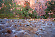Hikers in the Virgin River near the Temple of Sinawava, Zion National Park, Utah.