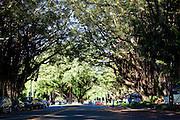 Banyan tree tunnell drive, Hilo, Island of Hawaii