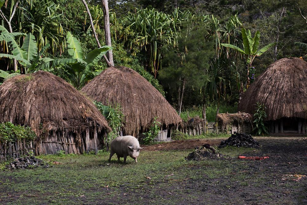 Dani tribe dwelling<br /> Budaya village<br /> Suroba<br /> Trikora Mountains<br /> West Papua<br /> Indonesia