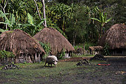 Dani tribe dwelling<br /> Budaya village<br /> Suroba<br /> Trikora Mountains<br /> West Papua<br /> Indonesia
