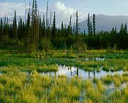 Marsh and boreal forest along Edith Creek, Kluane Ranges, Yukon Territory, Canada.