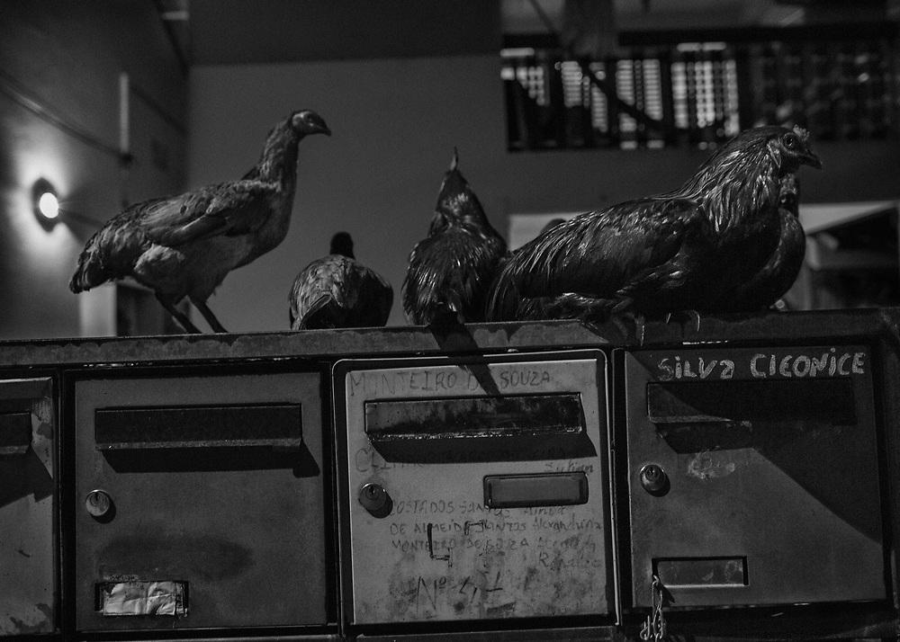 Saint-Georges de l'Oyapock, Guyane, 2015.<br /> <br /> Saint-Georges est historiquement un des gros points de passage de l'immigration entre la Guyane et le Brésil. On y compte beaucoup de familles binationales. Sa population est essentiellement composée de créoles, d'amérindiens, de brésiliens et de fonctionnaires métropolitains de l'éducation nationale. Les deux supermarchés sont tenus par des commerçants d'origine chinoise, comme souvent en Guyane.
