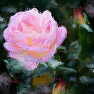 A vibrant impressionist painting of a pink rose to brighten your wall.
