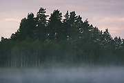 Fog covered lake in early summer morning | Kurzeme, Latvia