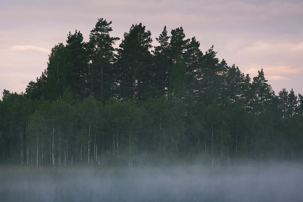 Fog covered lake in early summer morning   Kurzeme, Latvia