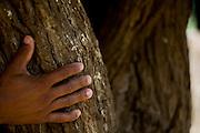 Prados_MG, Brasil..Artesanato em madeira em Padros, Minas Gerais...Wooden handicrafts in Prados, Minas Gerais...Foto: JOAO MARCOS ROSA / NITRO