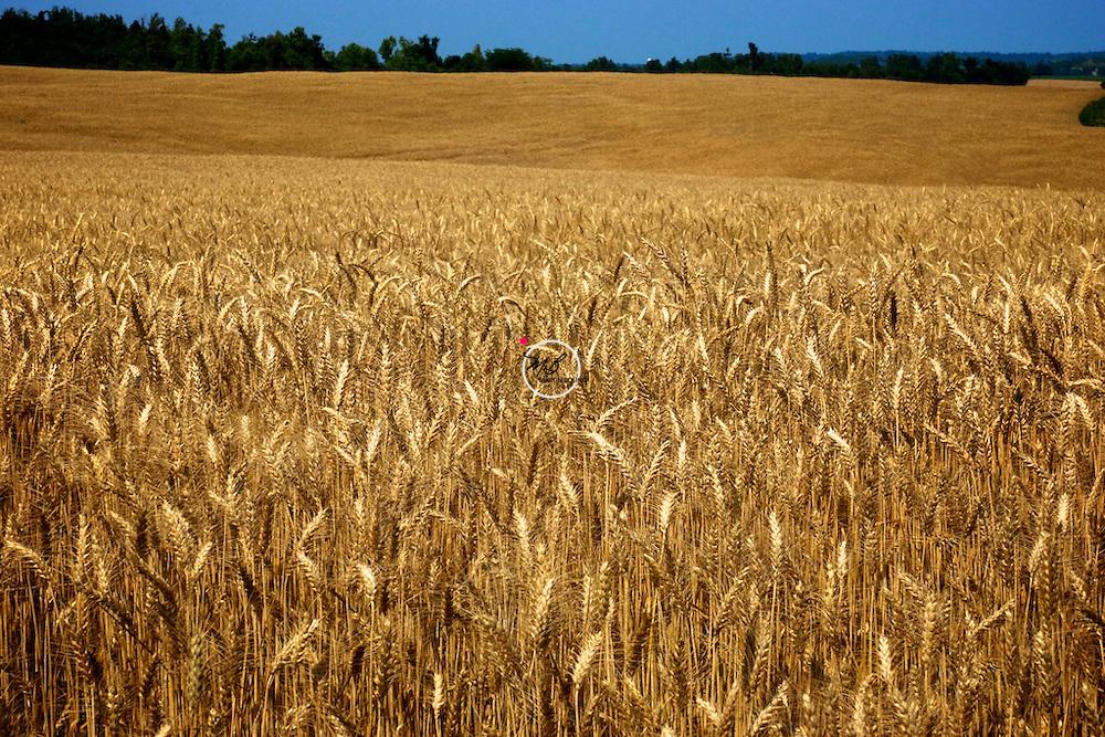 Kentucky Wheat Field