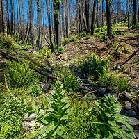 San Vicente Redwoods