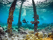 Giant pillars with Mushroom corals at Veale's Reef, Tufi, Papua New Guinea