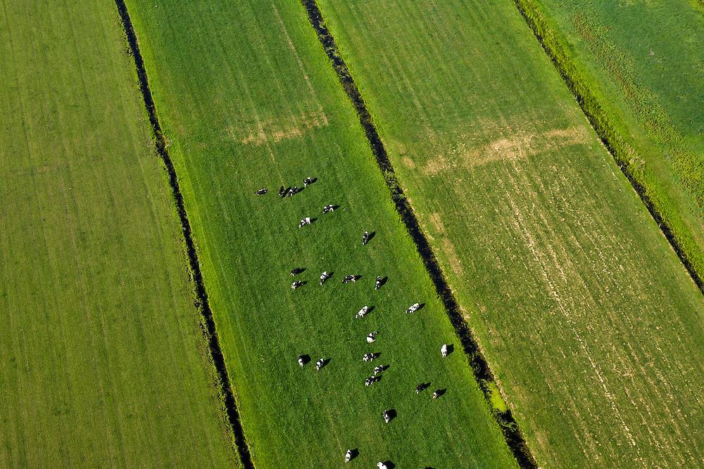 Nederland, Utrecht, De Bilt, 08-07-2010; Polder Achttienhoven, zwartbonte koeien in de wei..Friesian cows in the meadow..luchtfoto (toeslag), aerial photo (additional fee required).foto/photo Siebe Swart