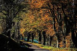 Sunshine on trees in autumn colour in the Scottish Borders<br /> <br /> (c) Andrew Wilson   Edinburgh Elite media
