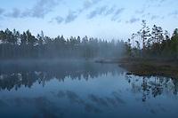 Bog woodland at dusk, Bergslagen, Sweden.