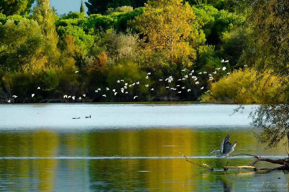 Lake bird wildlife