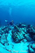 diver examines canon from <br /> wreck of 1840 English warship, <br /> Little Bahama Bank, near Walker's Cay, <br /> Bahamas ( Western Atlantic Ocean )  MR 89