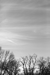 tree branches against the sky in Santa Fe, NM