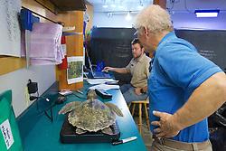 Bob Prescott & Michael Sprague Weighing Olive Ridley Sea Turtle, Sanctuary Director, Welfleet Bay Wildlife Sanctuary, Audubon