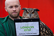 London, UK. Thursday 3rd January 2013. Zookeepers count every animal during ZSL London Zoo's annual stocktake. The compulsory count is required as part of ZSL London Zoo's zoo license, and all of the information is logged into the International Species Information System (ISIS), where it's used to manage the international breeding programmes for endangered animals. Max, the Eagle Owl.