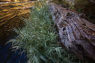 Scenes along the Wild and Scenic Metolius River near Camp Sherman, Oregon.