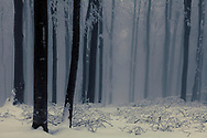 Misty forest covered in snow