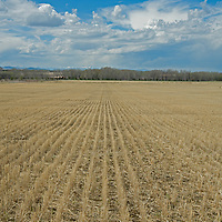 Clouds billow over a harvested wheat field near Bozeman, Montana.