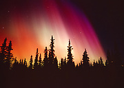 Brilliant red, orange, violet and purple aurora above spruce forest along Colorado Lake, geomagnetic storm during early morning hours of March 31, 2001, Broad Pass, Alaska.