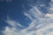 Cirrus clouds in a blue sky. Cirrus are short, detached, hair-like clouds found at high altitudes. These delicate clouds are wispy with a silky sheen or look like tufts of hair. In the day time, they are whiter than any other cloud in the sky.