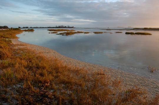 Wetland in southwest Florida.