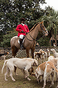 Huntsman Jamie Green waits with his hounds for the start of the first fox hunt of the season at Middleton Place Plantation December 1, 2013 in Charleston, SC.