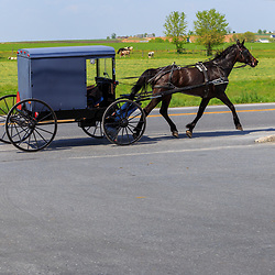 Gordonville, PA / USA - May 9, 2018: An Amish buggy travels along a rural road in Lancaster County.