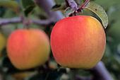 Orchard Life